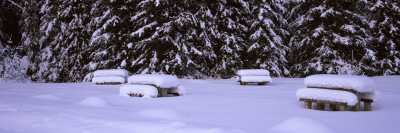 Snow Covered Picnic Tables on a Landscape, Banff National Park, Alberta, Canada Wall Decal by  Panoramic Images