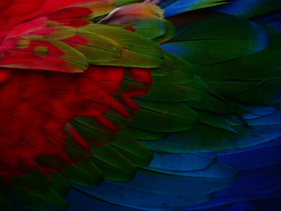 Macaw Plumage Detail Photographic Print by Diego Lezama