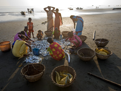 Villagers Looking at Fishing Catch on Beach Photographic Print by Johnny Haglund