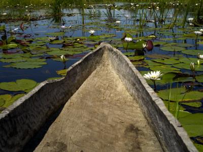 Mokoro, Traditional Dugout Canoe, Among Lilies on Delta Photographic Print by Doug McKinlay