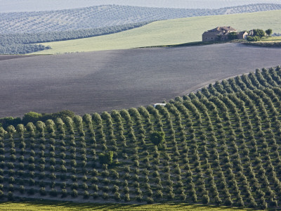 Country House in Middle of Olive Fields Photographic Print by Diego Lezama