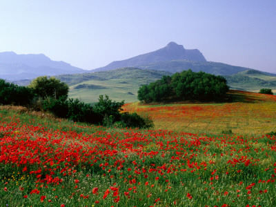 Rolling Hills with Poppies Near Olvera Photographie