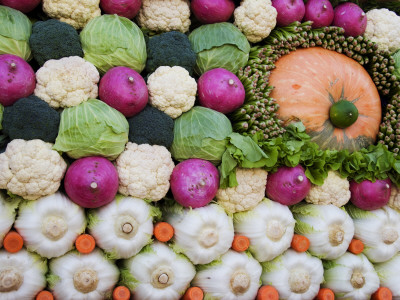 Vegetable Display at Yoyogi Park Agricultural Festival Photographic Print