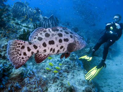 Fish on Reef Photographic Print by Johnny Haglund