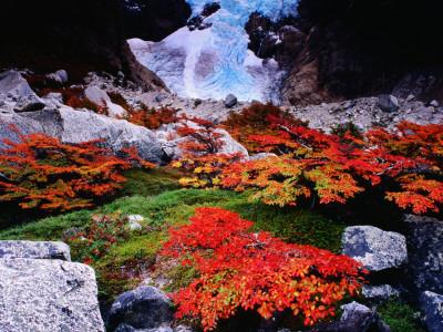 Autumnal Foliage Beneath the Glacier Piedras Blancas Photographic Print by Gareth McCormack
