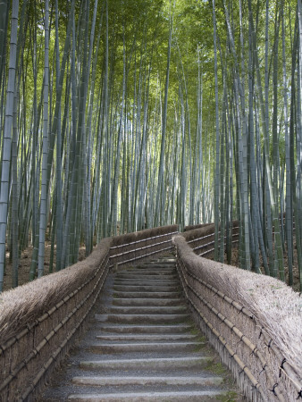 Stairway Through Bamboo Grove Above Adashino Nembutsu-Ji Temple Fotografiskt tryck