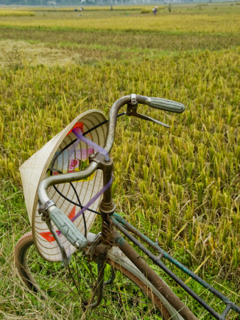 Bicycle and Coolie Hat in Ricefields on Outskirts of Hanoi Photographic Print
