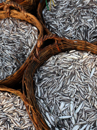 Baskets of Fish on Beach Fotografisk tryk af Paul Kennedy