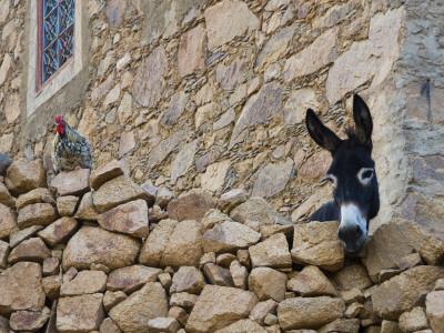 Hen and Donkey, Tizgui, Anti-Atlas Mountains Photographic Print by Aldo Pavan