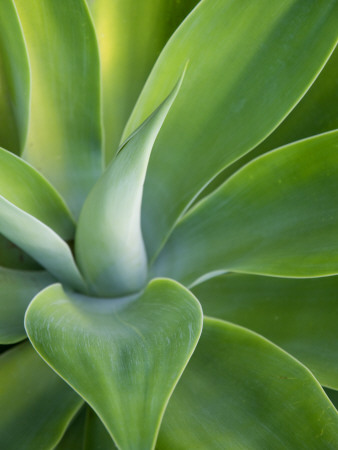Green Succulent Plant at Botanical Gardens Photographic Print