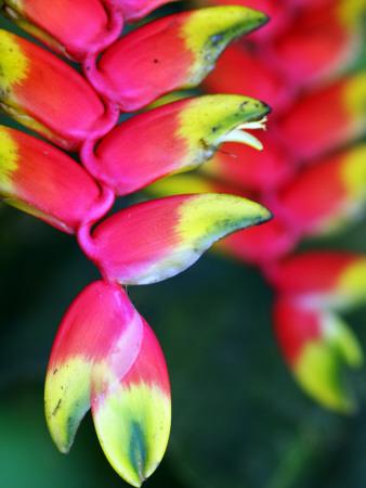Colourful Shitulli Flower Fotografisk tryk af Paul Kennedy