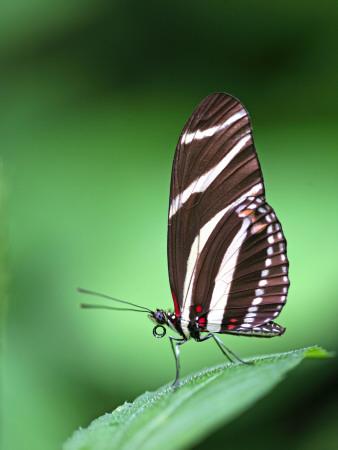 Close-Up of Buttefly Resting on Leaf Fotografisk tryk af Paul Kennedy