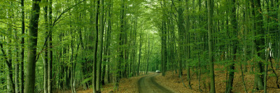 Forest Road Near Limburg, Germany Wall Decal by  Panoramic Images