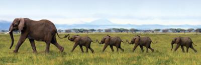 Elephants-Linking Trunks Prints