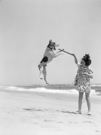 Wire Haired Terrier Dog Jumping in the Air Catch Photographic Print by H. Armstrong Roberts
