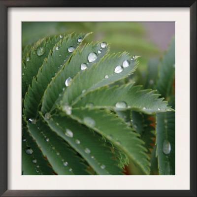 Dew Drops II Art by Nicole Katano