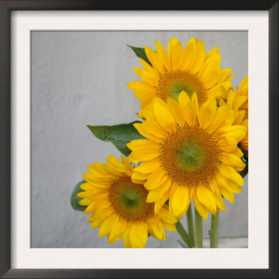 Sunflower Bouquet Posters by Nicole Katano