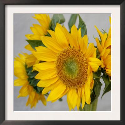 Sunny Sunflower IV Prints by Nicole Katano