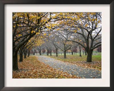 Autumn Path III Prints by Nicole Katano