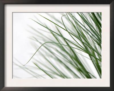 Reeds Art by Nicole Katano