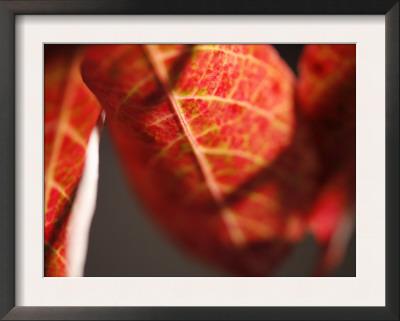 Crimson Leaf Art by Nicole Katano