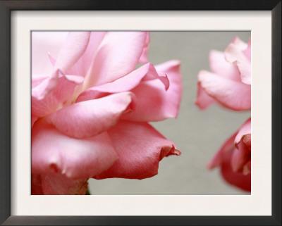 Rose Petals II Prints by Nicole Katano