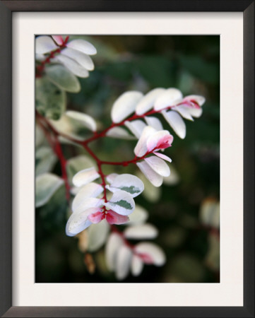 Pink and White Flower Prints by Nicole Katano