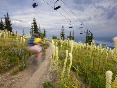 Mountain Biker Through the Beargrass on the Summit Trail, Whitefish Mountain Resort, Montana, USA Photographic Print by Chuck Haney