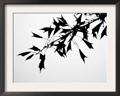 Leaf Silhouette Posters by Nicole Katano