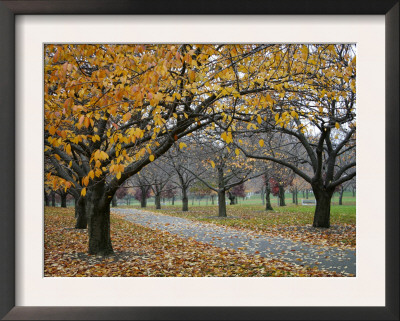 Autumn Path II Poster by Nicole Katano