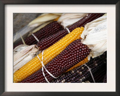 Autumn Harvest Posters by Nicole Katano
