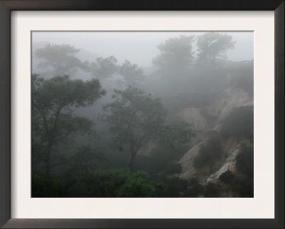 Canyon Mist II Prints by Nicole Katano