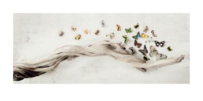 Drift of Butterflies Print by Ian Winstanley