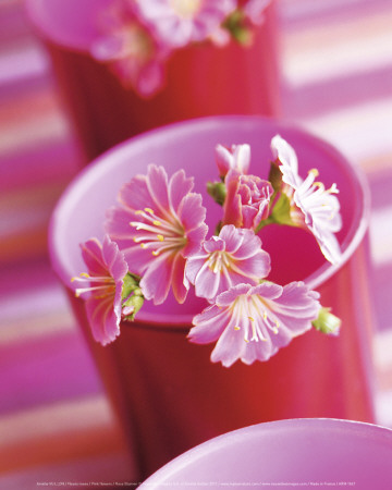 Pink Flowers Prints by Amelie Vuillon