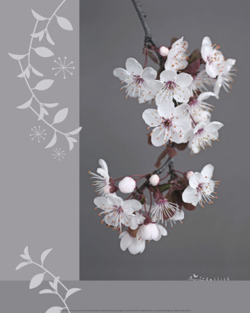 Plumtree Flowers Poster by Amelie Vuillon