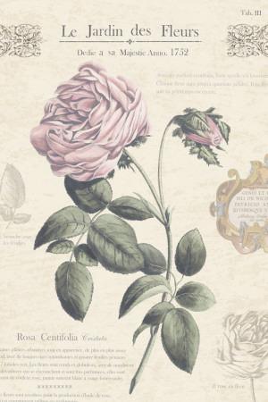 Le Jardin des Fleurs IV Posters by Maria Mendez