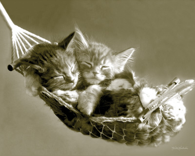 Keith Kimberlin - Kittens in a Hammock Mini Poster