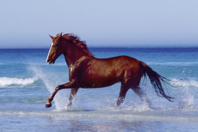 Beach - Beautiful Horse Poster