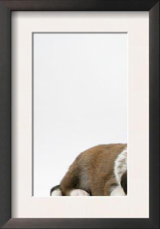 Fawn Dutch Rabbit with Sleeping Sable-And-White Border Collie Pup Posters by Jane Burton