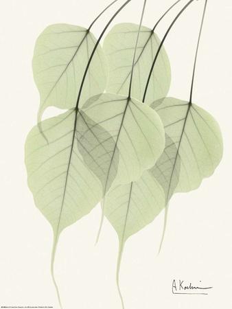 Cascading Bo Tree Art by Albert Koetsier