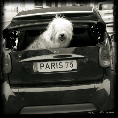 Paris Dog I Posters by Marc Olivier