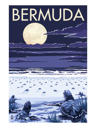 Bermuda - Turtles Hatching Poster by  Lantern Press