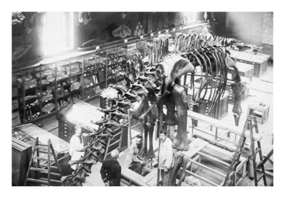 Diplodocus Dinosaur Being Assembled In Paris Museum Posters