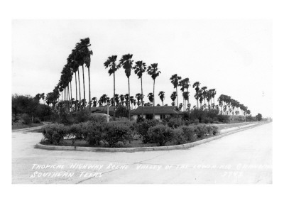 Texas - Palms along the Highway in Lower Rio Grande Valley Posters by  Lantern Press