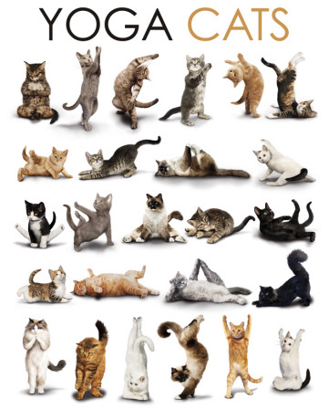 Yoga - Cats Miniposter