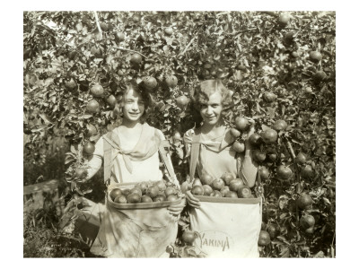 Girls with Apple Harvest, Yakima, 1928 Lámina giclée por Asahel Curtis