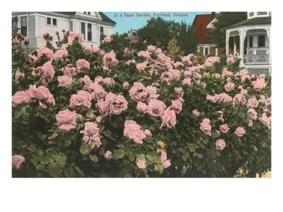 Rose Garden, Portland, Oregon Prints