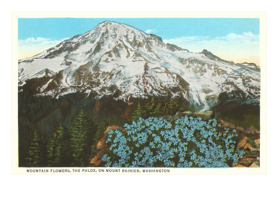 Phlox on Mt. Ranier, Washington Premium Poster