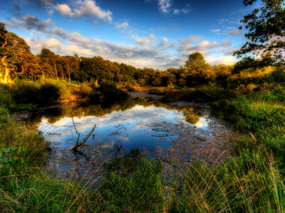 Nature 26 Photographic Print by Brian Stevenson