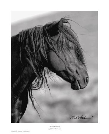 Wild Stallion I Art by Claude Steelman